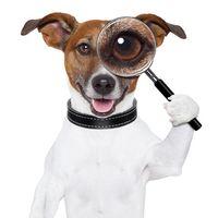 Magnifieddog_by_javier_brosch_Fotolia[1]